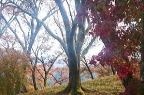 奈良県御杖村 丸山公園 紅葉